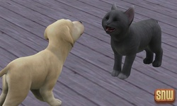The Sims 3 Pets: BaBa the dog and Oopsie-Daisy the cat
